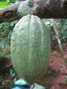 kakao in chocolate slim